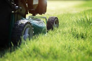 yard cutting lawn service